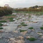 Reuso da água, um dos caminhos para evitar o caos, como o que assola o rio Piracicaba (Foto José Pedro Martins)