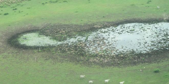 Projeto que regulamenta a caça de animal silvestre preocupa organizações ambientalistas
