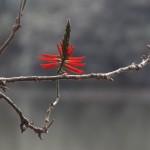 Lista Verde da IUCN objetiva melhorar a conservação de áreas protegidas (Foto Adriano Rosa)