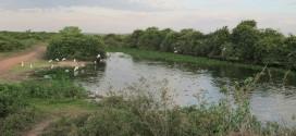 SESC Pantanal, área de proteção e ecoturismo que inclui um dos Sítios Ramsar no Brasil (SISTEMA S E O BRASIL – II)