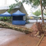 Árvore que caiu no Centro de Convivência, no Cambuí, em Campinas, após as fortes chuvas (Fotos José Pedro Martins)