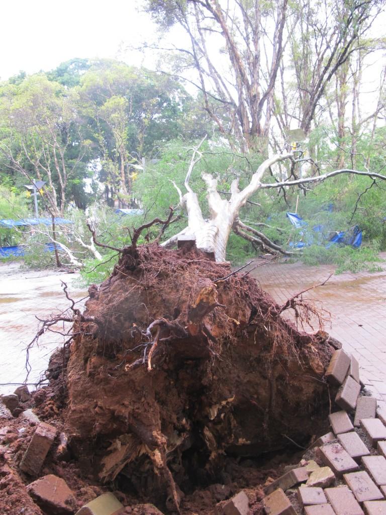 A outra árvore caiu do lado da rua São Pedro, próximo à feira especial de Natal
