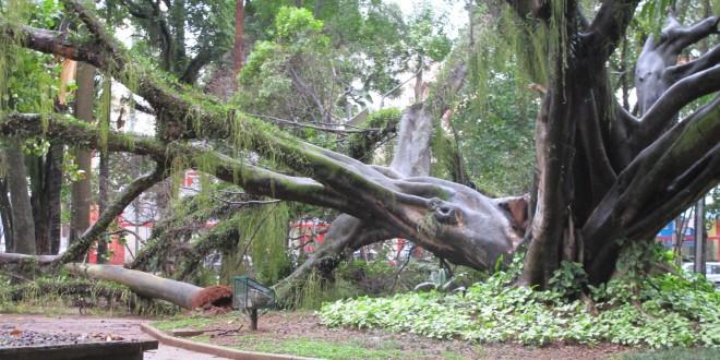 Centro de Convivência Cultural tem duas quedas de árvores após fortes chuvas