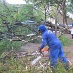 Funcionário da Prefeitura de Campinas trabalha no Centro de Convivência em função de queda de árvore (Foto ASN)