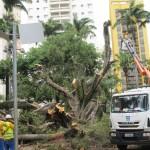 Quatro equipes do DPJ foram mobilizadas para a retirada da grande árvore (Fotos José Pedro Martins)
