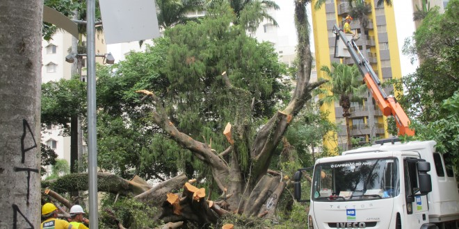 """Prefeitura monta """"operação de guerra"""" para retirada de árvore que caiu no Centro de Convivência"""