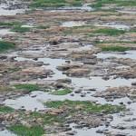 Trecho do rio Piracicaba em agosto de 2014: devastação ambiental, agora sentida novamente com a baixa vazão, como uma alerta para os poderes públicos (Foto José Pedro Martins)