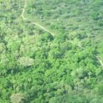 Pantanal, um dos biomas brasileiros: proteger florestas é um dos Objetivos de Desenvolvimento Sustentável (Foto José Pedro Martins)