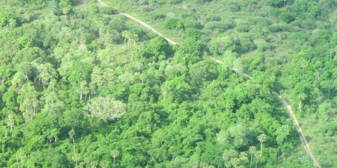 Campanha da Fraternidade é estratégica para frear destruição de biomas no Brasil