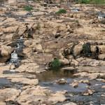 Rio Piracicaba na semana passada: panorama de desolação, que pode se repetir ao longo do ano (Fotos Adriano Rosa)