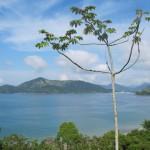 Proteção dos mares e biodiversidade entre os ODS (Fotos José Pedro Martins)