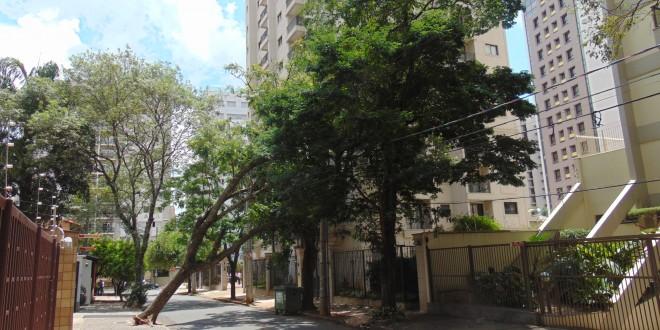 Forte ventania derruba árvore e parte do Cambuí fica sem energia