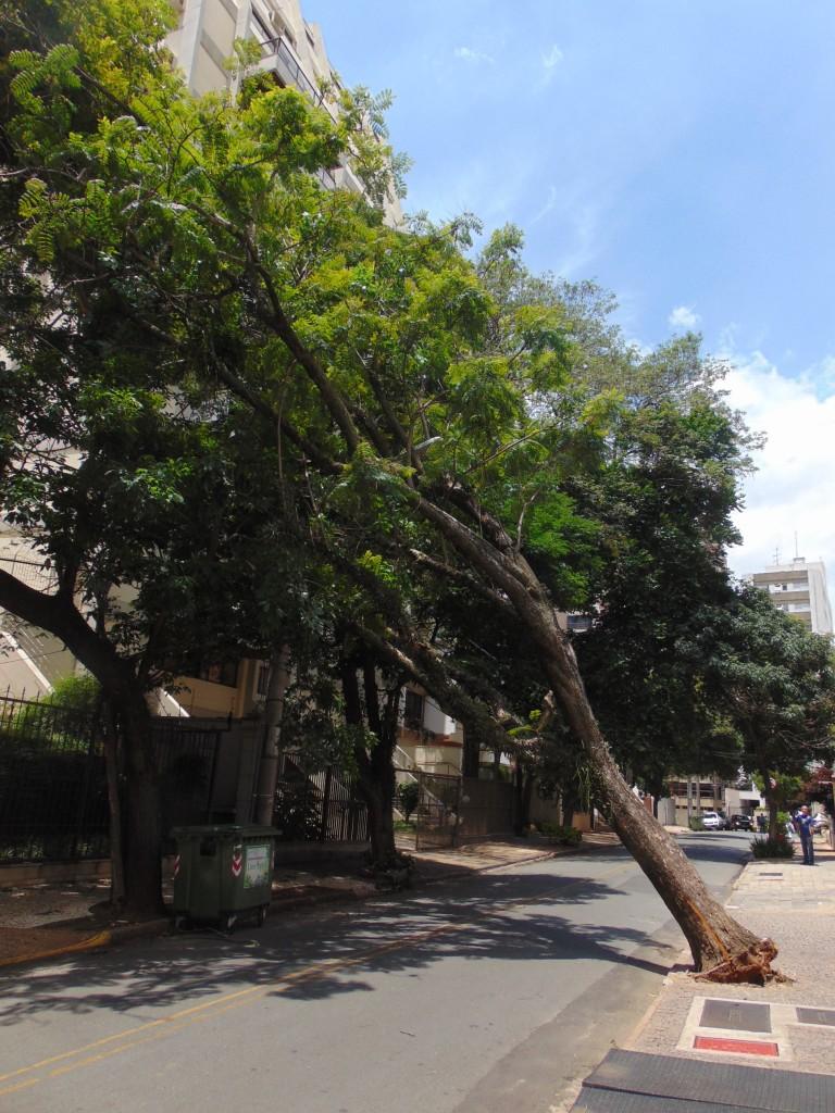 Queda de árvore provocou a interrupção de energia em quarteirões próximos