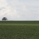 Plantação de soja no Centro-Oeste (Foto Adriano Rosa)