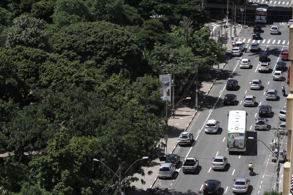 O verde na avenida, essencial para a qualidade de vida