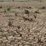 Estiagem em 2014, que contribuiu para a seca no Cantareira, esteve em debate em Paris (Foto Adriano Rosa)