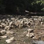 Rio Atibaia seco em 2014: recuperar e proteger nascentes que alimentam corpos hídricos é um dos objetivos do novo Programa Pagamento por Serviços Ambientais previsto em lei (Foto Adriano Rosa)