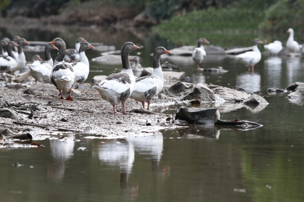 Sinais de vida no rio Atibaia, em plena estiagem