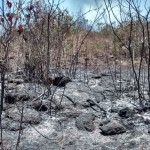 Incêndio já havia atingido o Rola Moça em outubro de 2014 (Foto Amda)