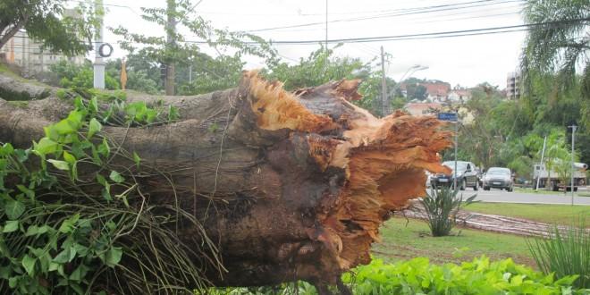 """Atingida por """"microexplosões"""" semelhantes a tornado, Campinas busca a reconstrução"""