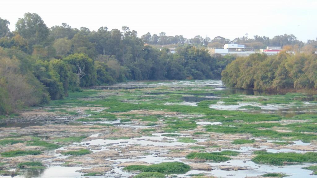 Em agosto de 2014, rio Piracicaba quase seco: efeito generalizado de evento climático extremo (Foto José Pedro Martins)