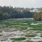 Em agosto de 2014, rio Piracicaba quase seco: impacto generalizado da forte estiagem, mostrando vulnerabilidade dos recursos hídricos às mudanças climáticas  (Foto José Pedro Martins)