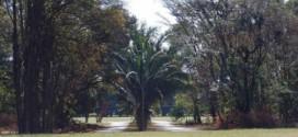 Corrida e Caminhada do Café, pela valorização do Instituto Agronômico de Campinas