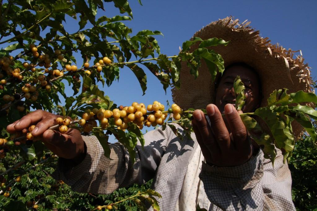 Avanço tecnológico contribui para a produção de café, e também outros produtos agrícolas, no Nordeste (Foto Adriano Rosa)