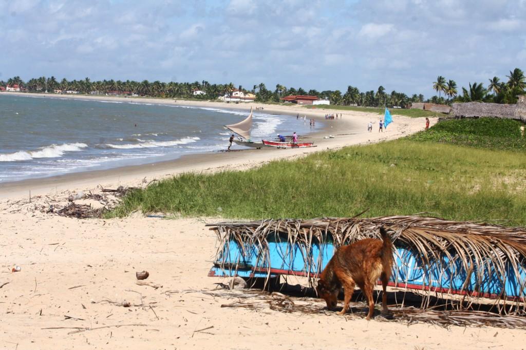 Praia de Lucena, na Paraíba, já vem diminuindo com a elevação do nível do oceano (Foto Adriano Rosa)
