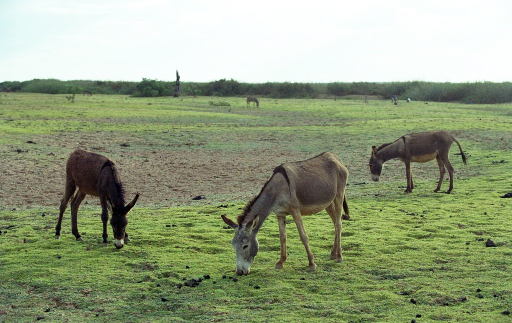 Seca profunda no Nordeste é exemplo de riscos para o agronegócio (Foto Adriano Rosa)
