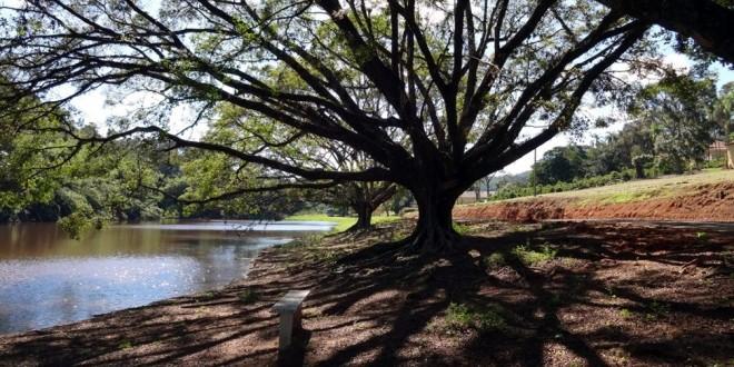 Plantio de árvores em Jundiaí contribui para a segurança hídrica da região