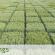 Parlamento britânico convida pesquisadores brasileiros para discutir futuro da agricultura