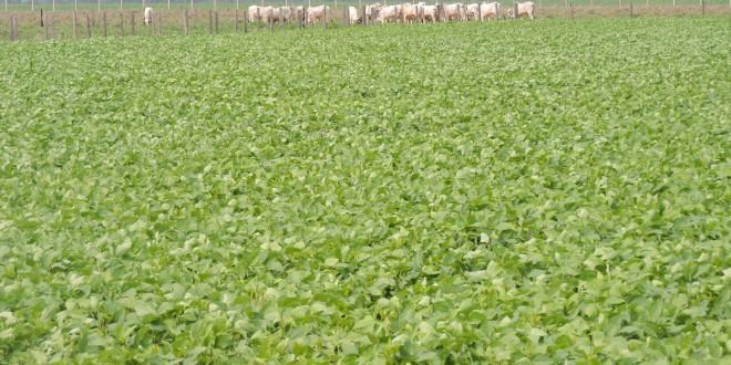 A contribuição da agricultura para os Objetivos de Desenvolvimento Sustentável