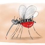 Campinas e dengue, por Synnöve Hilkner
